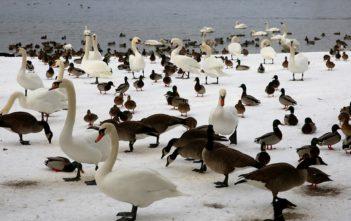 Vogelgrippe Schutzmassnahmen