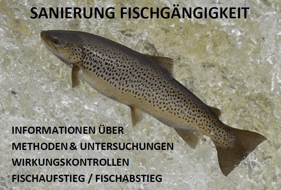 BAFU, Fischabstieg, Fischausteig, Fischdurchgängigkeit