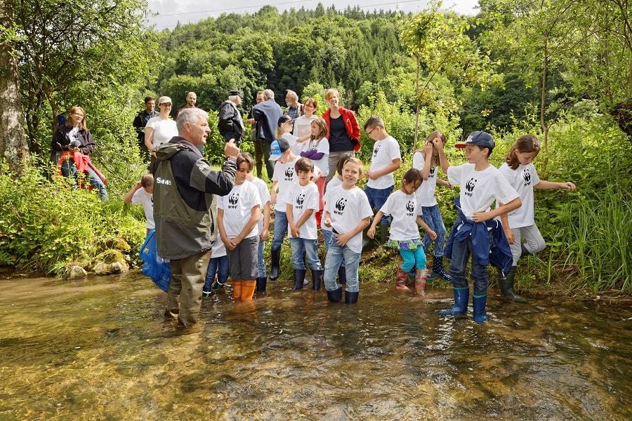 Lachs Wiederansiedlung, LAchse im Magdnerbach, Rhein 2000, Wanderfische