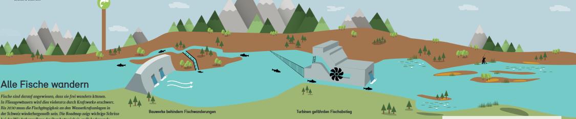BAFU; Wanderfische, Roadmap Fischwanderung