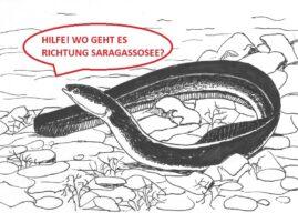 QUALVOLLES AAL-GEMETZEL DURCH KRAFTWERKE IM RHEIN
