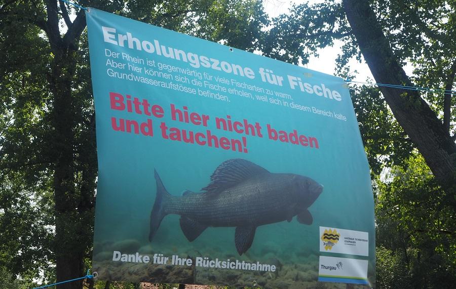 ÄHITZESOMMER, Aesche, Rhein